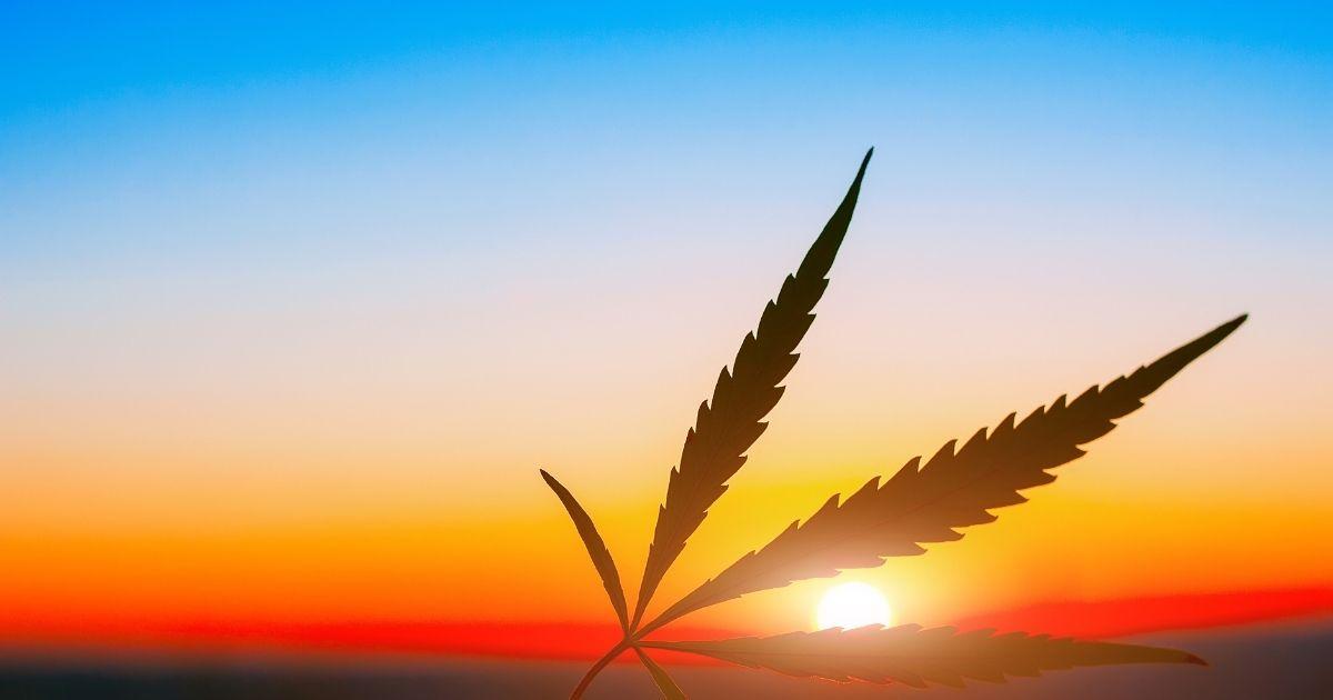 april-cannabis-duft-des-monats